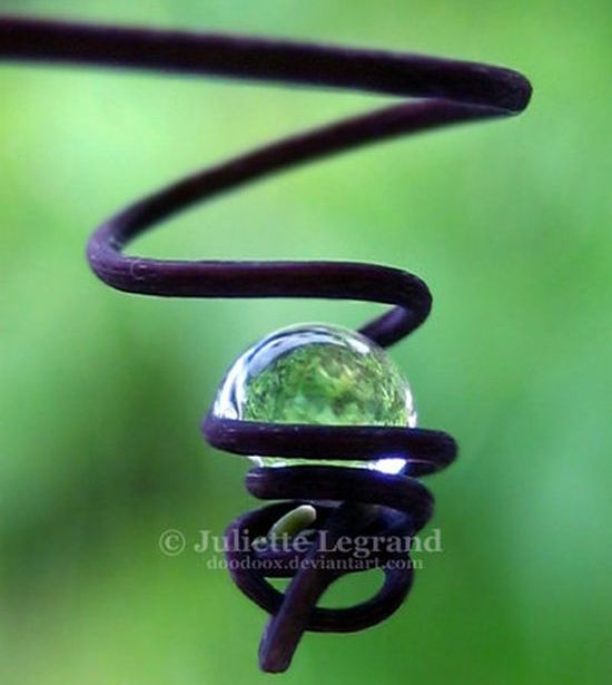 Dew_Drop_Photography_1.jpg