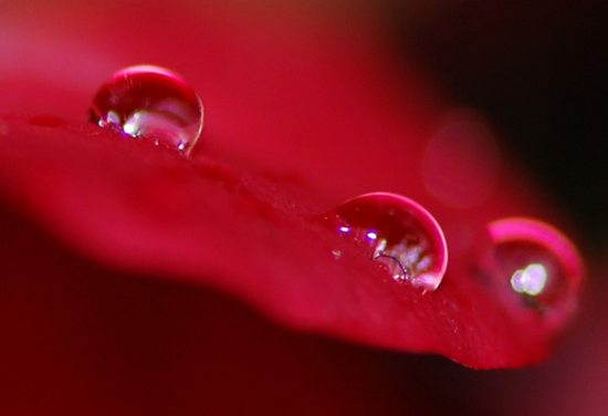 Dew_Drop_Photography_15.jpg