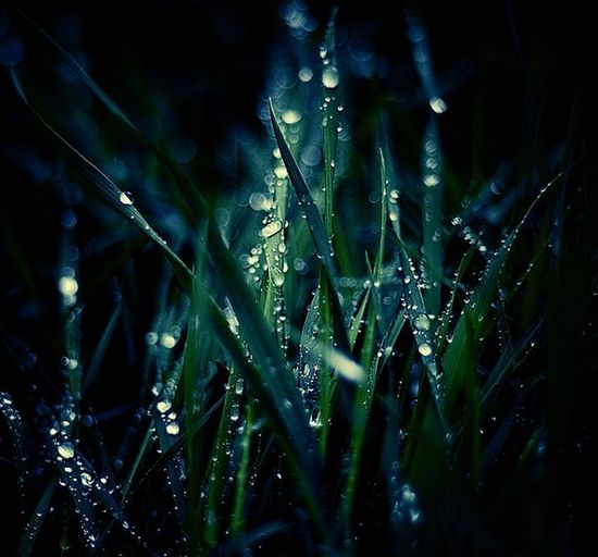 Dew_Drop_Photography_30.jpg
