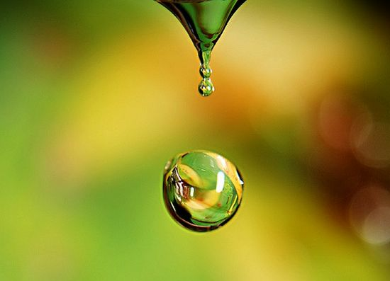Dew_Drop_Photography_35.jpg
