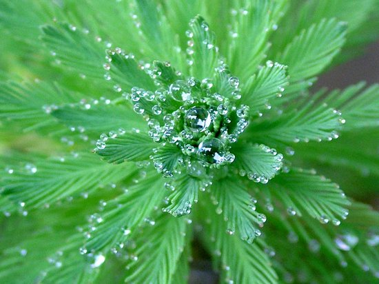 Dew_Drop_Photography_46.jpg