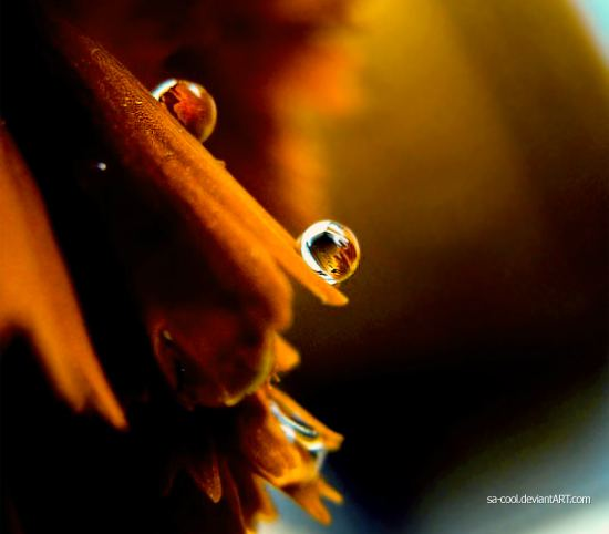 Dew_Drop_Photography_5.jpg