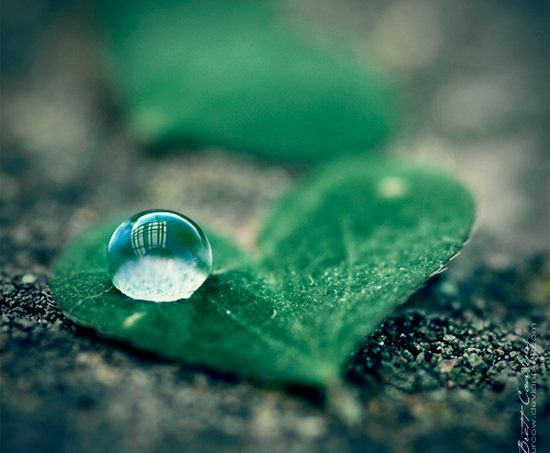 Dew_Drop_Photography_6.jpg
