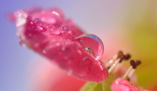 Dew_Drop_Photography_8.jpg