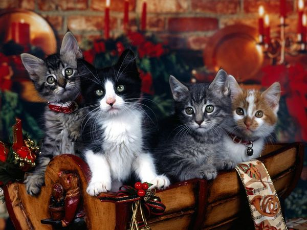 christmas-cats-wallpapers_31829_1024x768.jpg