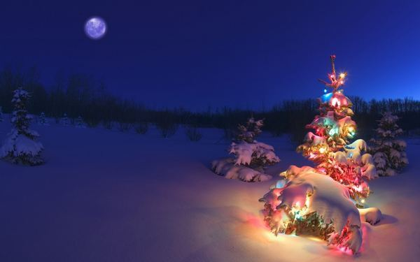 christmas-tree-in-the-snow-wallpapers_31825_1280x800.jpg