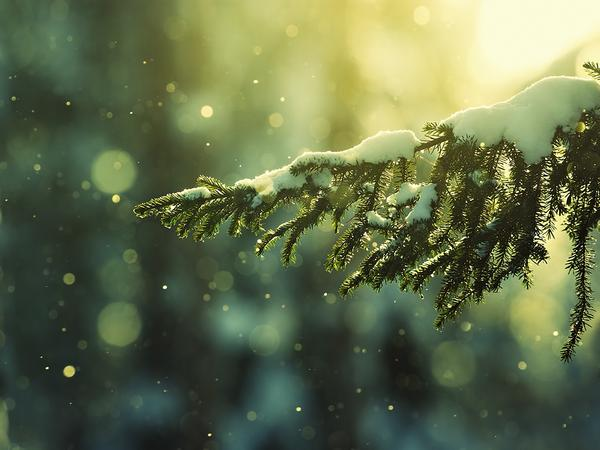 snow_and_winter_wallpapers_13.jpg