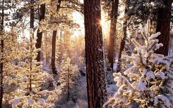 snow_and_winter_wallpapers_2.jpg