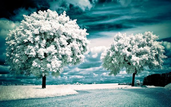 snow_and_winter_wallpapers_25.jpg
