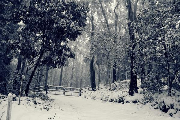 snow_and_winter_wallpapers_29.jpg