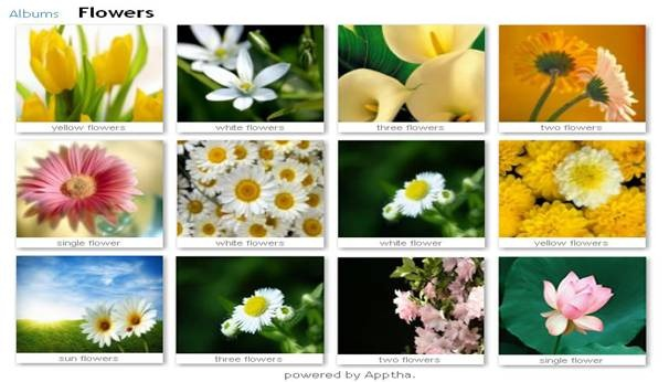 wordpress_image_gallery_plugin_04
