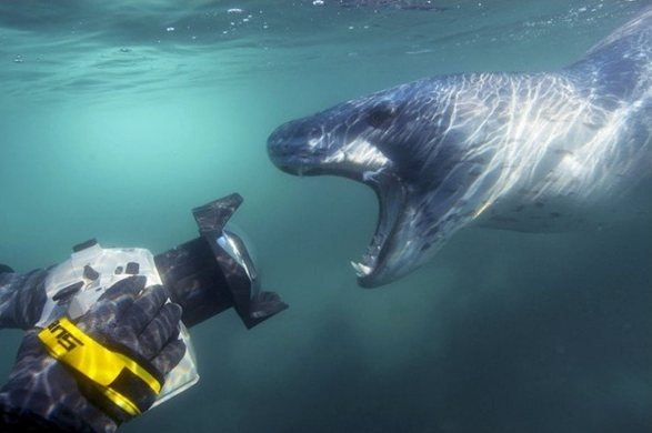 leopard_seal_underwater_wildlife_photography_amos_nachoum