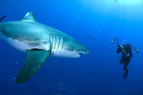 shark_underwater_wildlife_photography_amos_nachoum